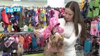 Планета ZOO// Выбираем одежду для собак.