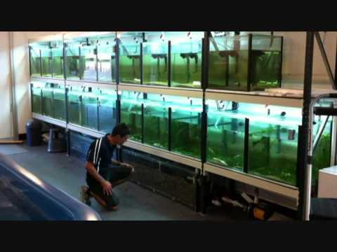 Palm Beach Currumbin State High Wet Lab