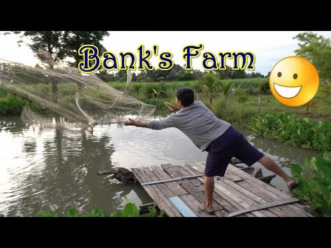 Fishing at Bank's Farm Suphan Buri Thailand Part 1