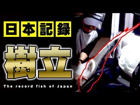 The Japanse record jack fish!