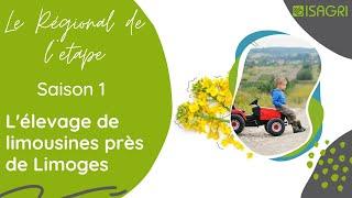 Le régional de l'étape - L'élevage de limousines près de Limoges