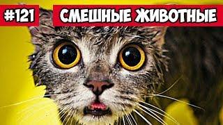 Смешные животные - мокрый кот   Bazuzu Video ТОП подборка 121, март 2018