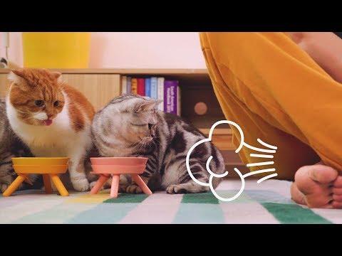 고양이가 밥을 먹을 때 방귀를 뀌었을 때 반응은?!