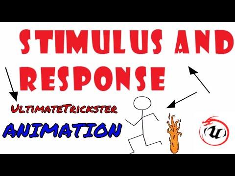 STIMULUS AND RESPONSE ANIMATION🐉🐉