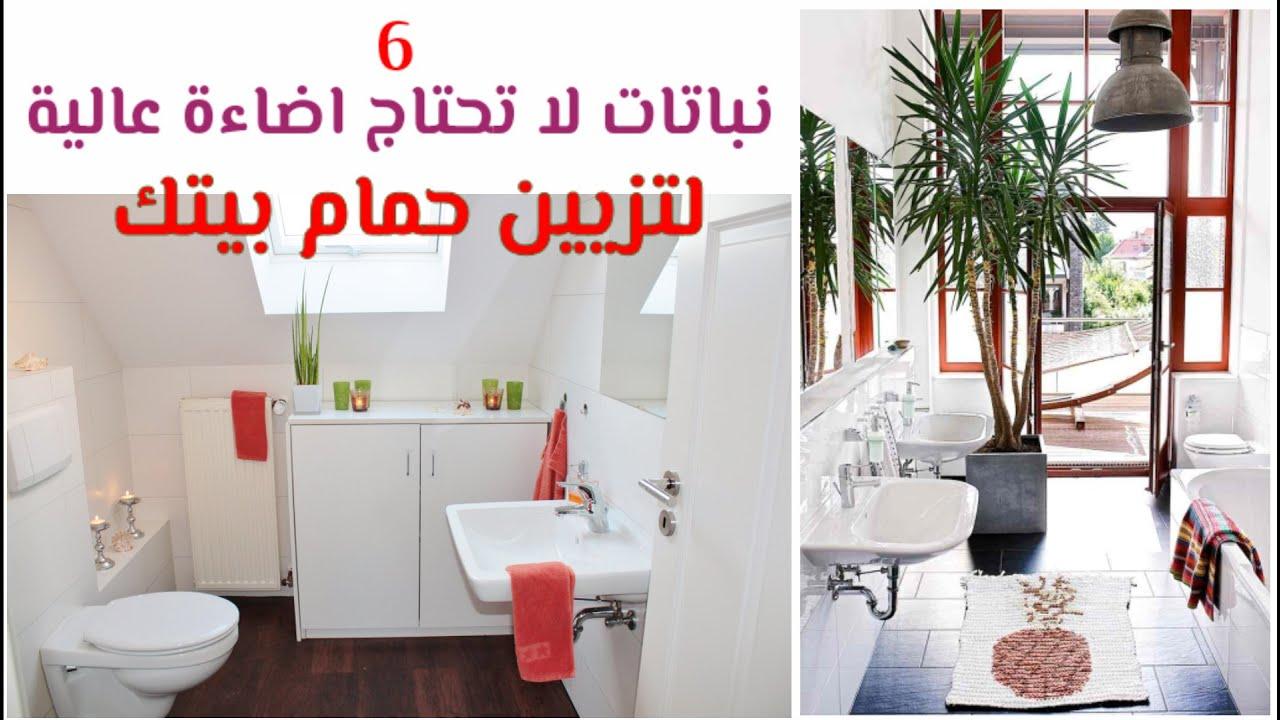 أفضل 6 نباتات لا تحتاج إضاءة قوية لتزيين الحمام