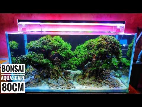 #159-membuat-2-bonsai-aquascape-ukuran-80cm