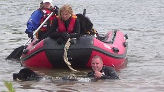 Newfoundland Rescue Dog Jumps Into A Lake After Handler And Tows Boat At Rescue Day 2014