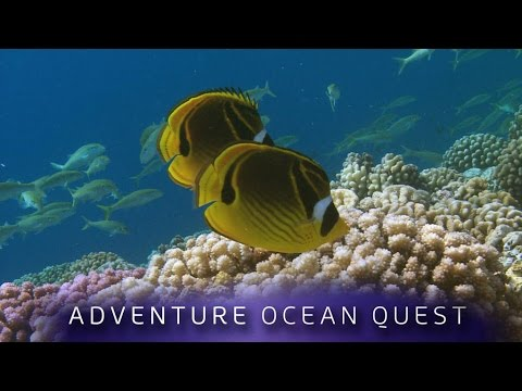 ► Adventure Ocean Quest - 24 Hours on the Reef (FULL Documen