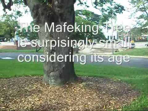Mafeking Tree Ingham.wmv