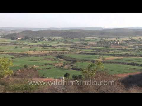 Aerial view of vast green fields of Gwalior