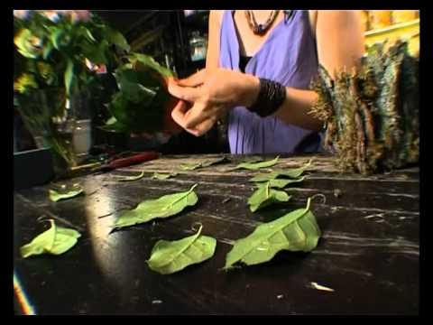 видео: Ботаника. Цветочные подарки