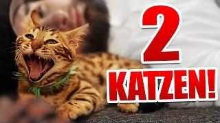 2 Katzen Überraschung :)