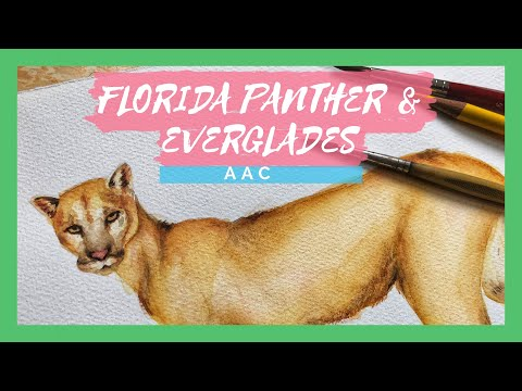 The Florida Panther and the Everglades | Animal Artists Collective - Wetlands, Lakes, and Rivers