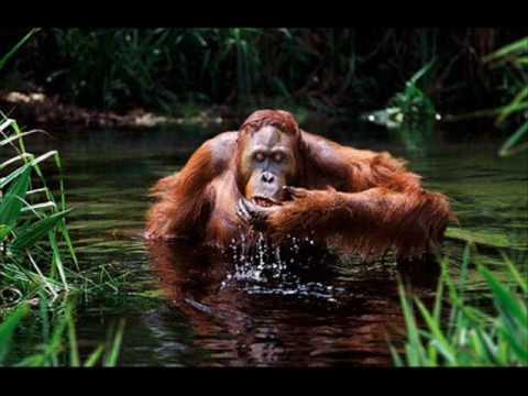 Peter Singer (I) Speciesism & Animal Rights