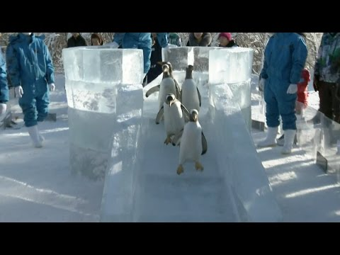 Penguins, Arctic Foxes at Harbin Polarland Attract Tourists