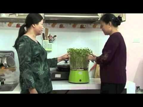 Máy trồng rau mầm - Miễn phí giao hàng toàn quốc