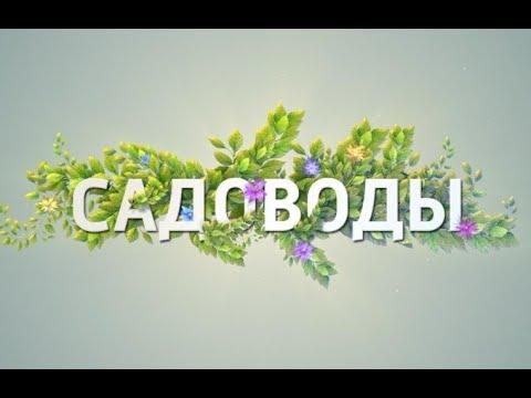 """Садоводы"". Виноград"