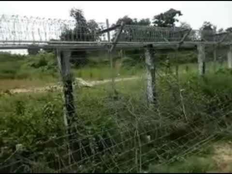 Myanmar army deployed along the border line of No Man's Land, with Bangladesh