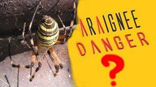 Morsure d'araignée, ça pourrait t'arriver...