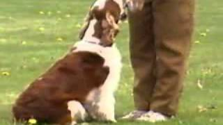 Welsh Springer Spaniel - Chapter 1
