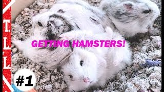 Getting 3 or more Winter White Hamsters! Shopping at Petco PetSmart Petland Twins Living Life TLL #1