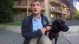 Going On A Business Trip With A Guide Dog
