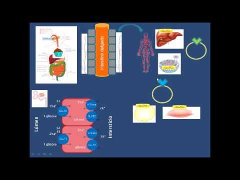 Introdução à Fisiopatologia do Diabetes Mellitus