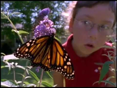 The Secret Lives of Butterflies