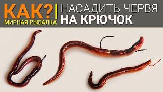 видео: Как правильно насадить червя на крючок?