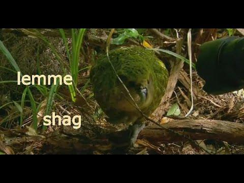 lemme shag