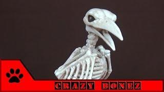 Crazy Bonez: скелет птицы