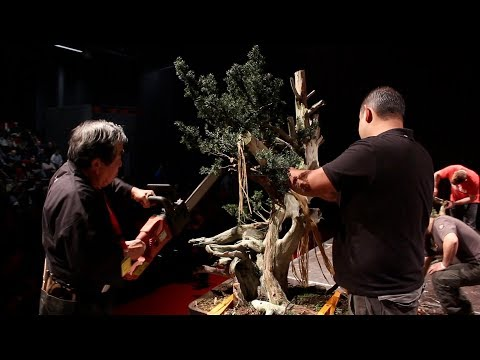 Kunio Kobayashi Bonsai demo