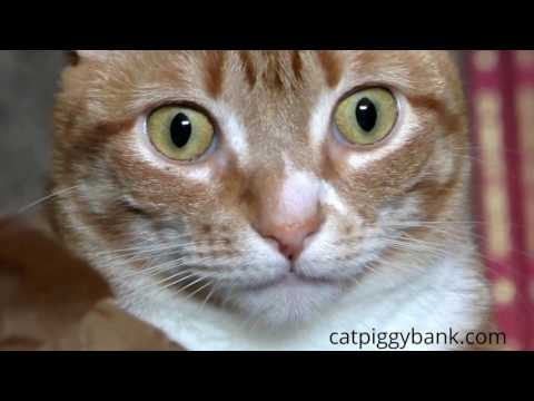 Stealing Coin Cat Piggy Bank