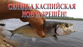 видео Правила рыболовного торможения