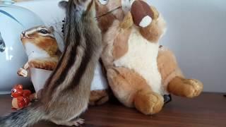 다람쥐 올드비가 다람쥐 뉴비를 다루는 방식