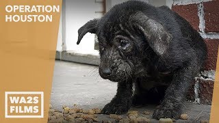 Rescue Of Panda The Tiny Shivering Quivering Mangy Puppy - Please Share