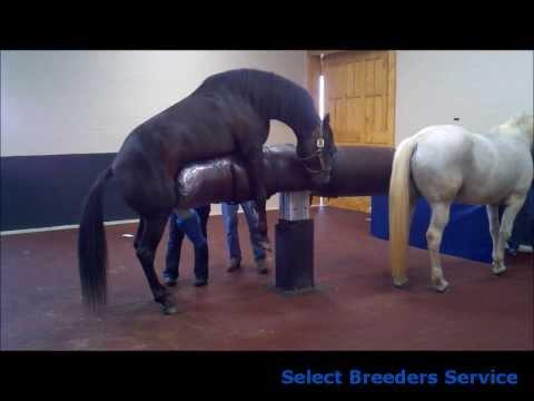 Hydraulic Breeding Phantom Installed at Select Breeders in Maryland