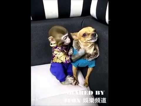 Tatlı Maymun Ve Yaramaz Köpek Youtube