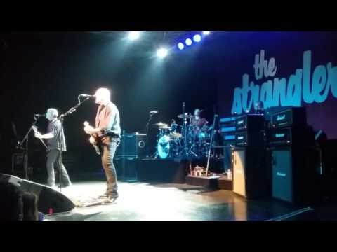 THE STRANGLERS