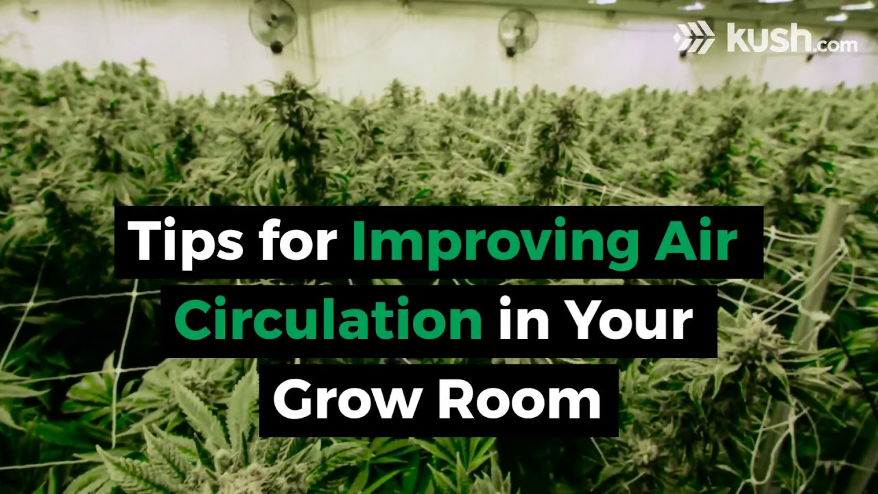 Tips for Improving Air Circulation in Your Grow Room | Kush com