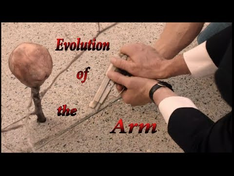 Download Evolution of the Arm - A Twin Peaks Discussion (Ep. #7)