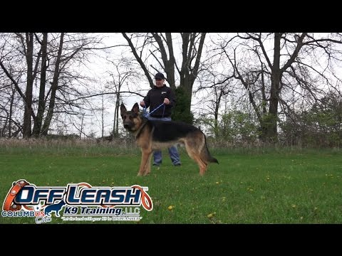 Dog Training: 1 Year Old German Shepherd, Storm! Before/After 2 Week Board and Train!