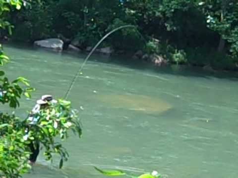 Fly fishing north branch of the potomac river youtube for Potomac river fishing report