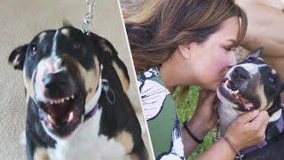 How Snarling 'Devil Dog' Became a Little Angel