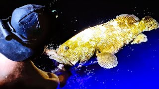 GIANT DEEP SEA GROUPER FISHING AT NIGHT Wahoo Catch And Cook (Upgrading My Car) - Ep 210