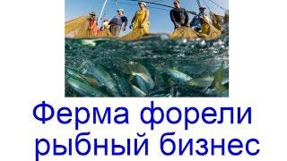 Ферма форели – рыбный бизнес. Ферма по выращиванию форели
