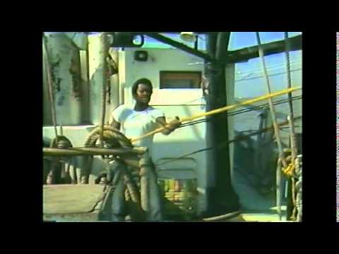 Harvesting Georgia's Shrimp