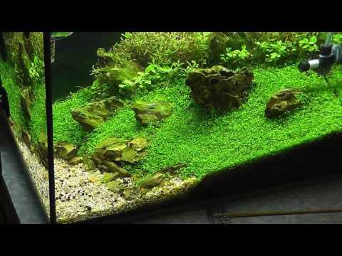 Aquarium HACK !!  CLEANING SAND!!!