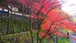 2014年横蔵寺の紅葉