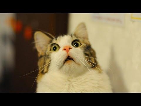 Смешные картинки Гифки, приколы фото про «Гифки» смотреть 1